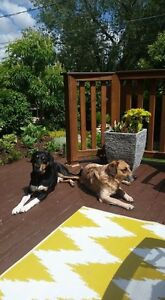 2 missing dog swift current area