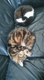 Foster home needed for two loving cats