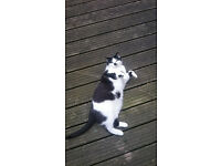 Wonderful cat up for adoption - asap! (neutered male, very friendly and sociable)
