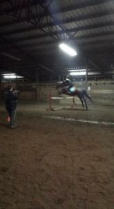ISO of horse to partboard