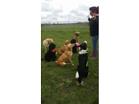 The Pet People Leeds - Offering limited walking doggy daycare places - £20.00 per day!!