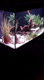 modern fish tank with black enclosed cupboard ex con full setup collection only