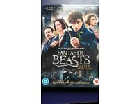 Fantastic Beasts and Where to Find Them - DVD
