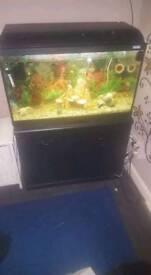 130 litre fish tank full set up