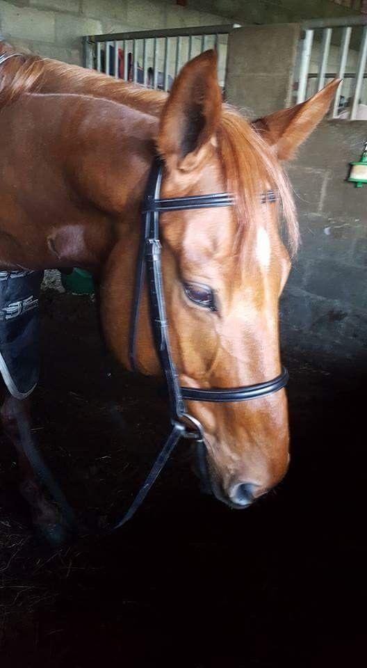 Horse for loan Aslan