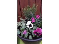 New filled barrel effect flower pots