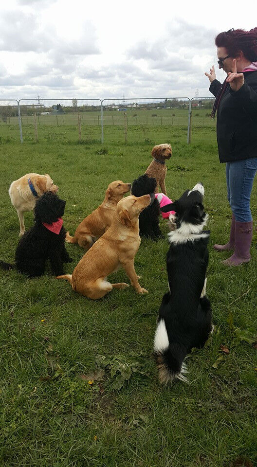The Pet People - Experienced/ insured dog walker limited walking slots available, leeds/Wakefield
