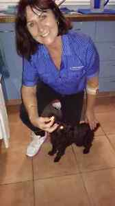 Reliable and loving home and pet/farm animal sitter. Elanora Gold Coast South Preview