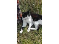 Black and white cat found at University of Nottingham