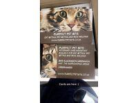 Purrfect Pet Sits *Cat Sitter And Dog Walker* Veterinary Nurse* DBS* SE3/SE6/SE26/SE18