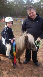 Minion the super pony... South Maclean Logan Area Preview