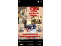 Stolen pugs