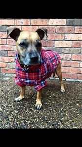 new dog flano jacket different sizes available Medowie Port Stephens Area Preview
