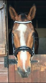 Comfort Bridle (Full Size)