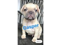 4 remaining beautiful French Bulldogs for sale