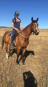 Beautiful Versatile Mare Glenvale Toowoomba City Preview