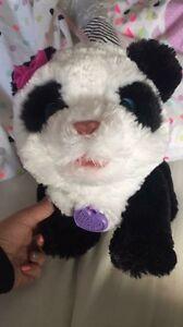 Fur real panda Corio Geelong City Preview