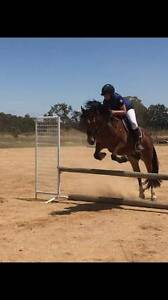 Fun all rounder pony mare Scarsdale Golden Plains Preview
