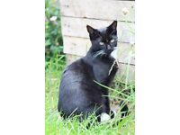 Missing young B&W male cat in Dronfield area - may be trapped in shed?