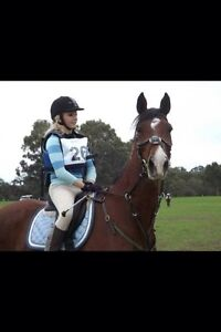Bombproof gelding for part lease Brigadoon Swan Area Preview