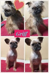 Dog Groomer with 17 years All Breed Experience