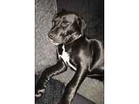 Sad rehoming needed for Marley
