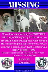 MISSING MALE BULL ARAB X - $500 REWARD FOR HIS SAFE RETURN Marks Point Lake Macquarie Area Preview