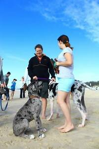 Pet Sitting & Dog Walking Eagleby Logan Area Preview