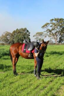 Equestrian Show Help Service