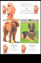 Dog walker Rockingham Rockingham Area Preview