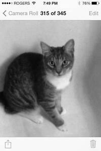 LOST CAT $800 reward