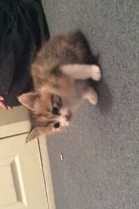 Kittens for sale Marsden Logan Area Preview