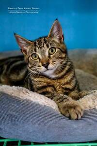 Sutherland Shire - Beautiful friendly rescue cats need new homes Gymea Bay Sutherland Area Preview