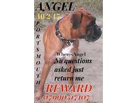 Please help us find STOLEN angel, missing since 10/2 - Substantial reward offered