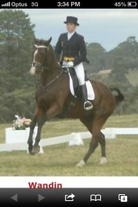 Horse riding lessons Warrandyte Manningham Area Preview