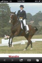 Horse riding lessons Warrandyte Manningham Area Preview