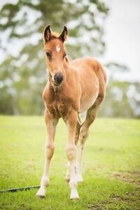 REG QH COLT Singleton Singleton Area Preview