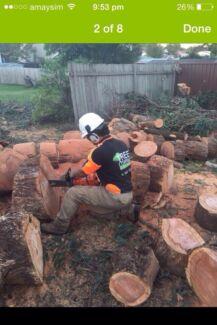 JACOB'S TREE LOPPING / STUMP GRINDING Parramatta Parramatta Area Preview