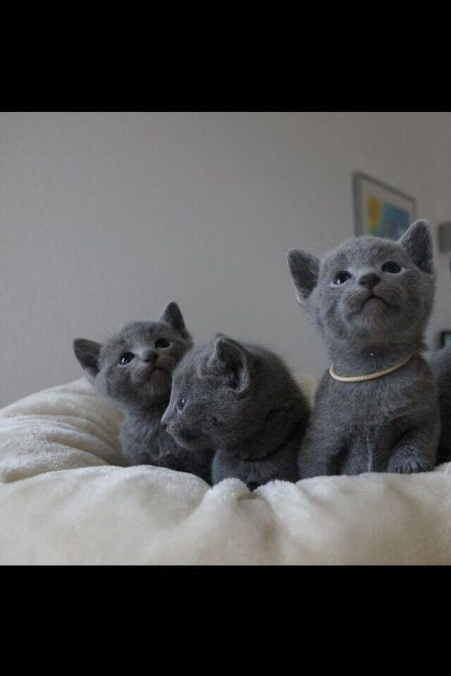 Kittens in London | Cats & Kittens for Sale - Gumtree - HD Wallpapers