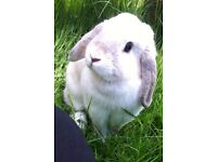 Beautiful white bunny rabbit for sale to a good home!