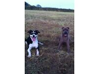 Dog Walking and Pet Services, based in Illogan, Redruth