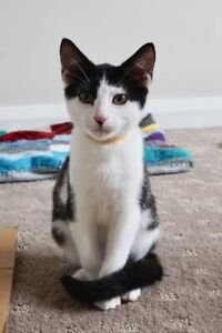 George 💚 ADOPT ME Desexed vaccinated microchipped