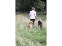 Lucky Dog dog walking services. Canine 1st Aid Cert; Fully insured; Max 3 dogs; safe country walks.