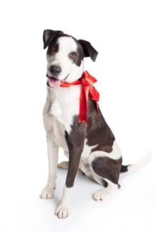 Adopt Thor North Ward Townsville City Preview