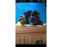 Marine live rock , 3 years mature 18 to 20kg