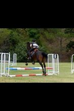 Friendly Gelding for sale Albany Creek Brisbane North East Preview