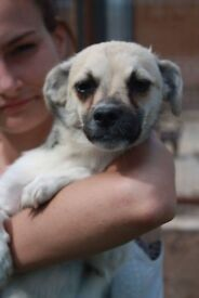 Sweetie is looking for her forever home!