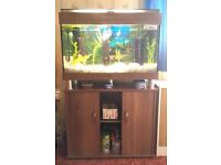 125L fish tank and stand