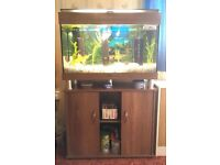 Foe Sale : 125L fish tank and stand