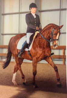 Scott Equestrian